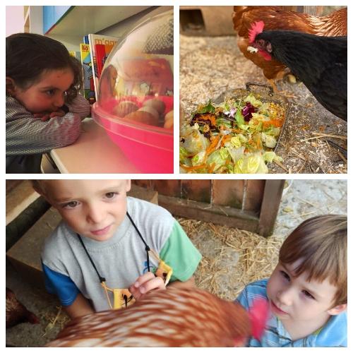 Nens i nenes d'infantil de l'escola FEDAC Gironella cuiden les gallines del projecte Galliner.