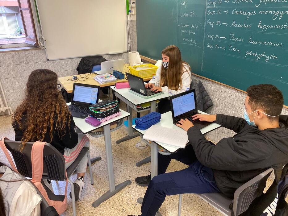 Alumnes de 4t d'ESO de l'escola FEDAC Vic descobreixen els noms científics en llatí i l'etimologia de les paraules de les espècies vegetals del parc Era d'En Sellés de Vic.